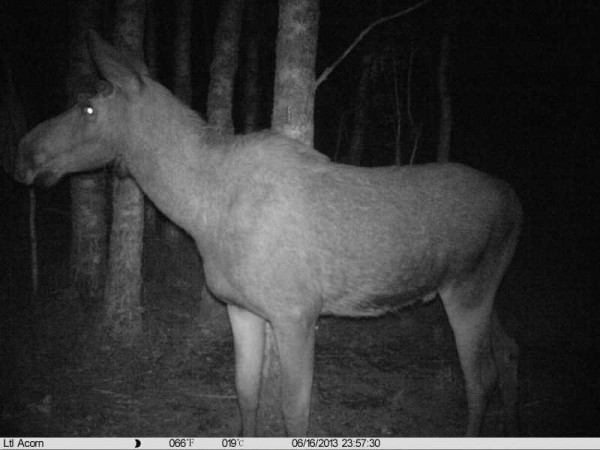 Ночное фото на фотоловушку
