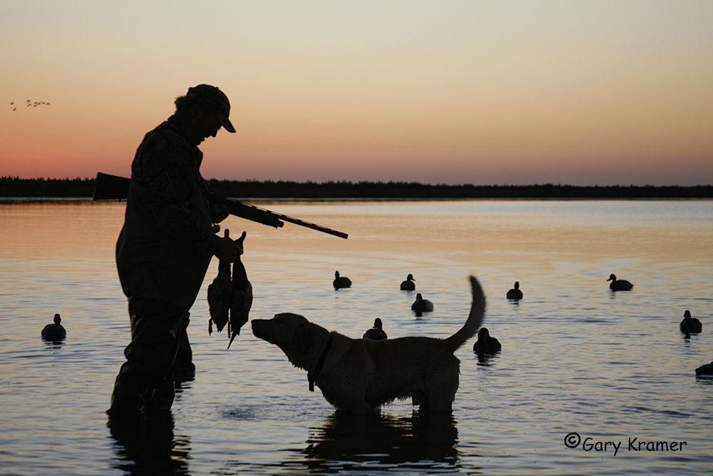 Охотник и лабрадор