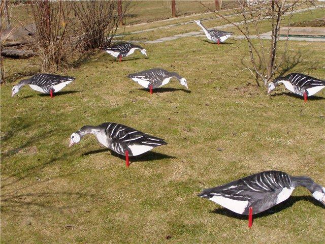 Профили гусей для охоты