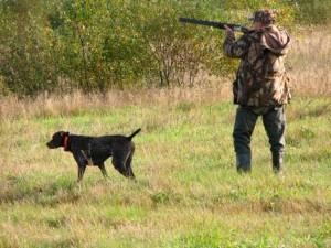охота с помощью собаки
