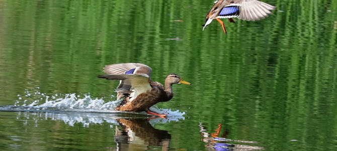Открытие весенней охоты по областям 2017