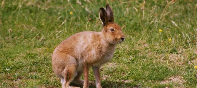 Охота из засидки на зайца – правила и особенности