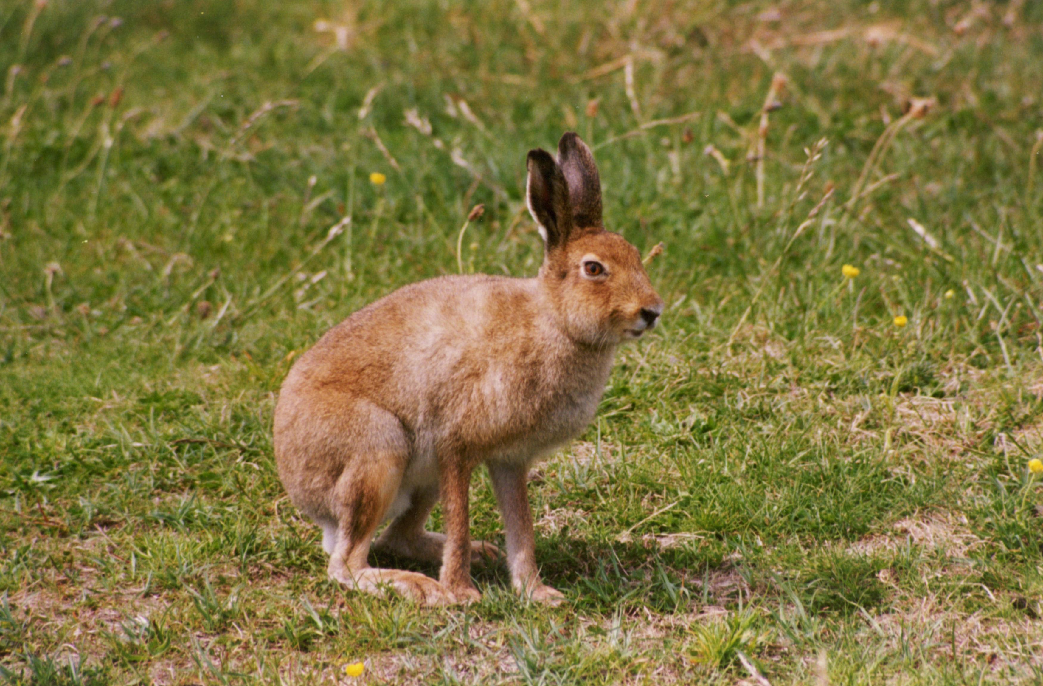 Когда откроится охота на зайца в 2019 году оренбургской области