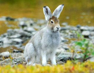 Как выбрать дробь на зайца и особенности охоты